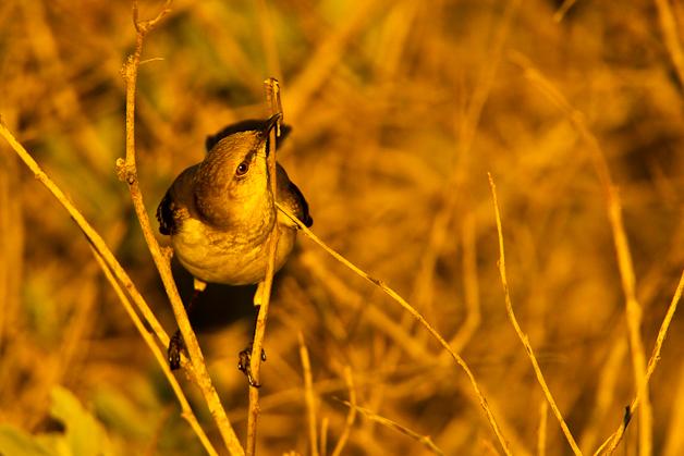 Goose Island State Park Texas Bird Hosts