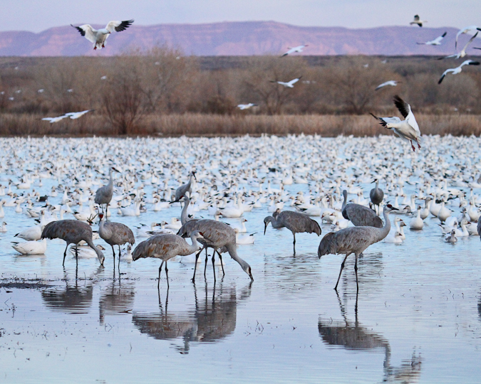 bosquedelapache-IMG_5921