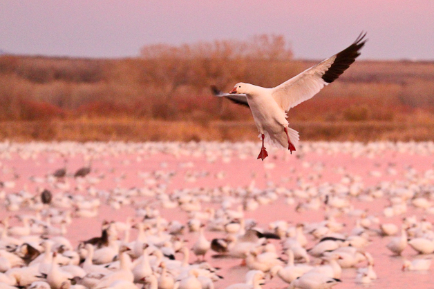 bosquedelapache-IMG_6005