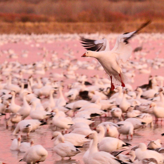 bosquedelapache-IMG_6007