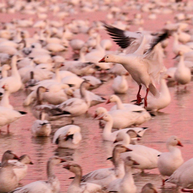 bosquedelapache-IMG_6009
