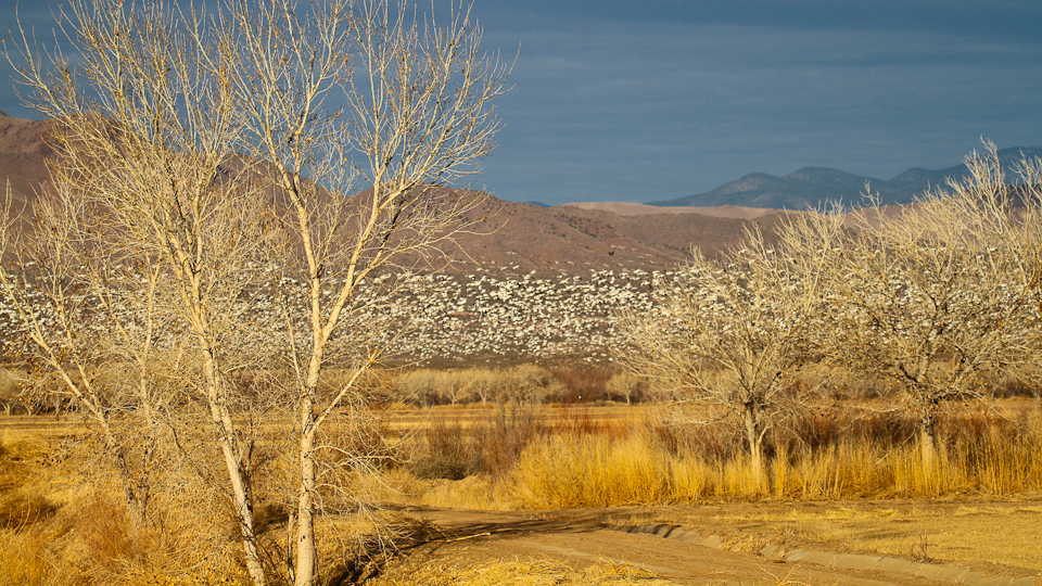bosquedelapache-IMG_6142
