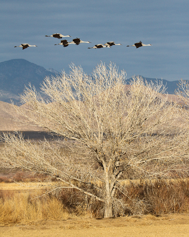 bosquedelapache-IMG_6289
