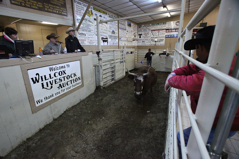 willcoxlivestockauction-IMG_8888