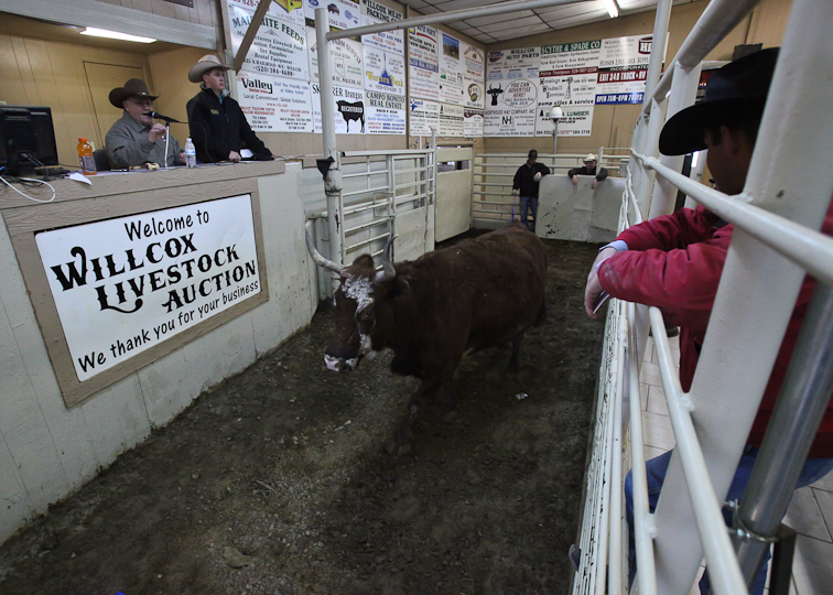willcoxlivestockauction-IMG_8892