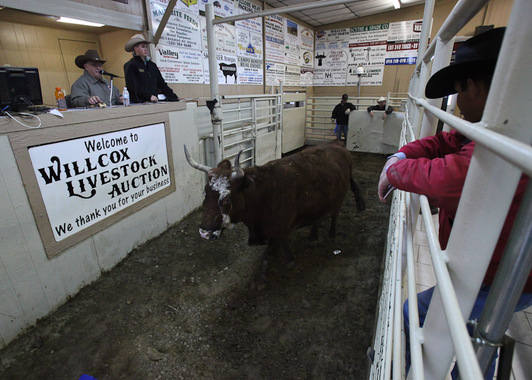 willcoxlivestockauction-IMG_8893