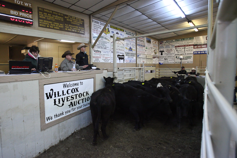 willcoxlivestockauction-IMG_8947