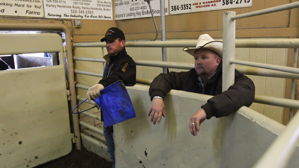 willcoxlivestockauction-IMG_9012