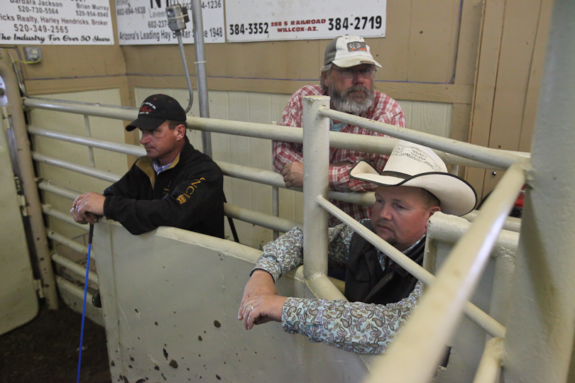 willcoxlivestockauction-IMG_9121