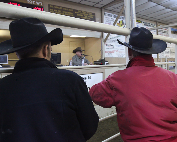 willcoxlivestockauction-IMG_9150