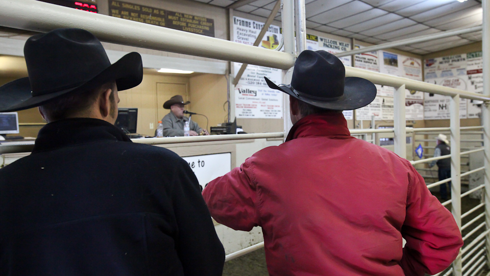 willcoxlivestockauction-IMG_9151