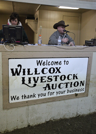 willcoxlivestockauction-IMG_9180