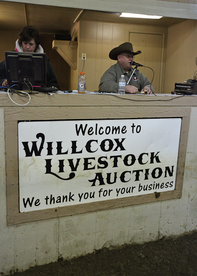 willcoxlivestockauction-IMG_9181