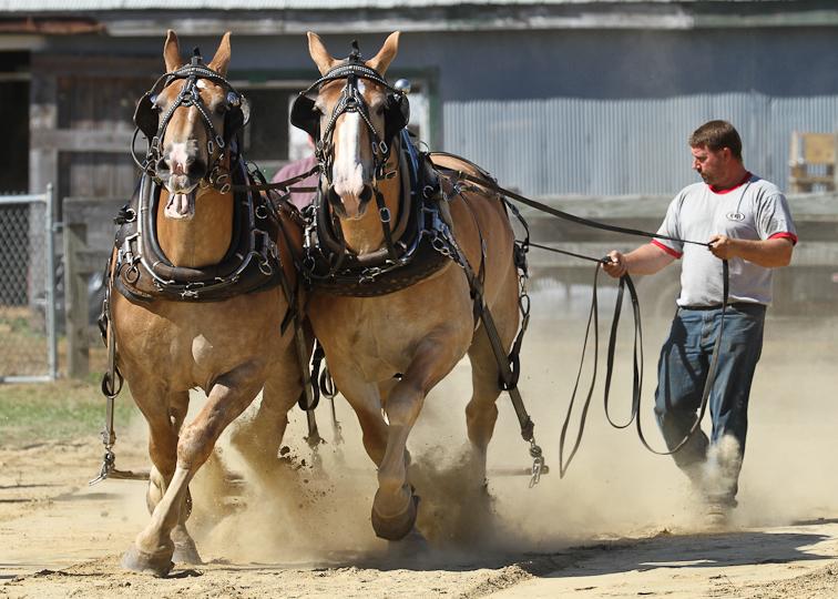 RochesterFair-HorsePull-IMG_8571