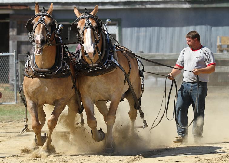 RochesterFair-HorsePull-IMG_8572