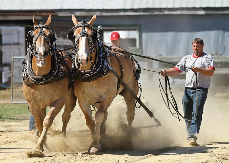 RochesterFair-HorsePull-IMG_8576