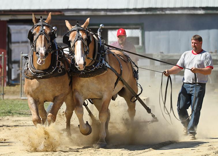 RochesterFair-HorsePull-IMG_8577