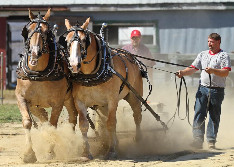 RochesterFair-HorsePull-IMG_8578