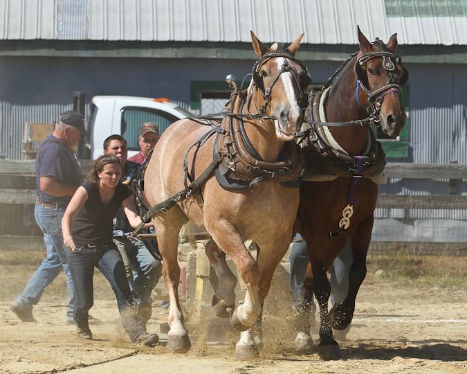 RochesterFair-HorsePull-IMG_8596