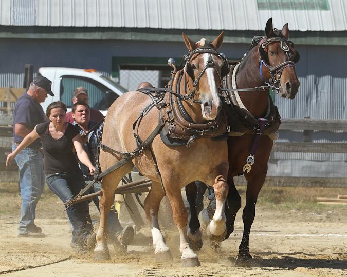 RochesterFair-HorsePull-IMG_8598