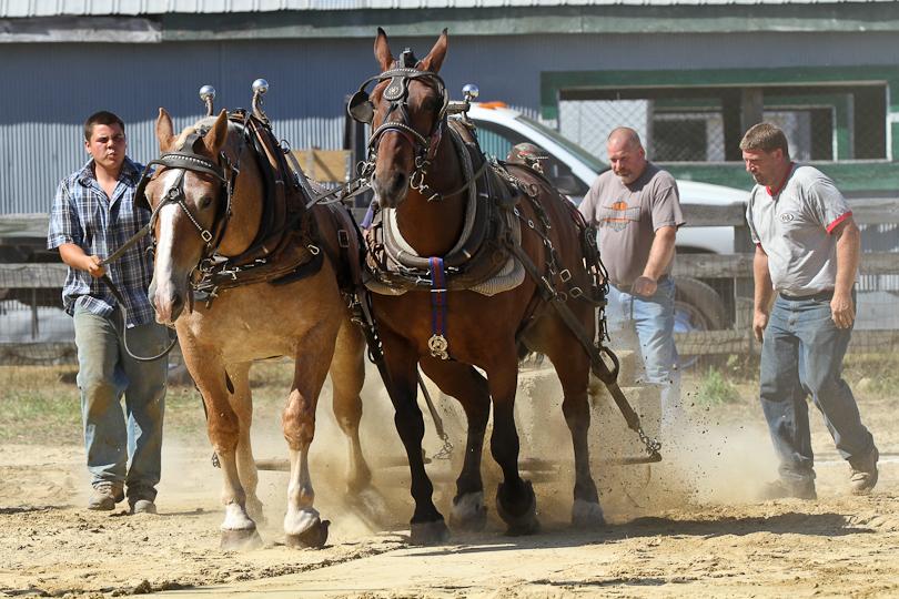 RochesterFair-HorsePull-IMG_8601