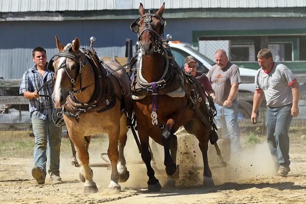 RochesterFair-HorsePull-IMG_8602