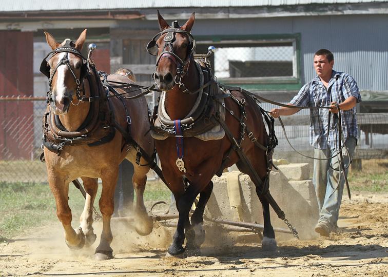 RochesterFair-HorsePull-IMG_8621