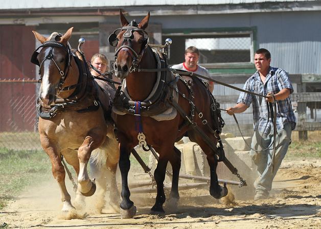 RochesterFair-HorsePull-IMG_8623