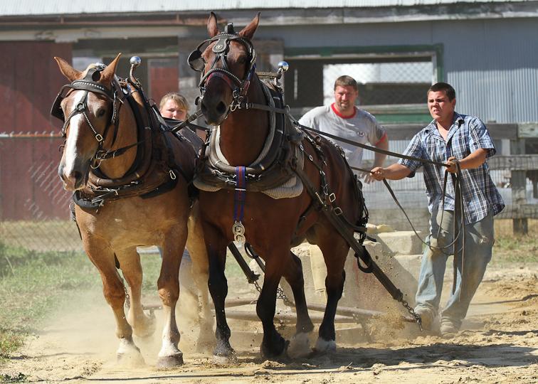 RochesterFair-HorsePull-IMG_8624