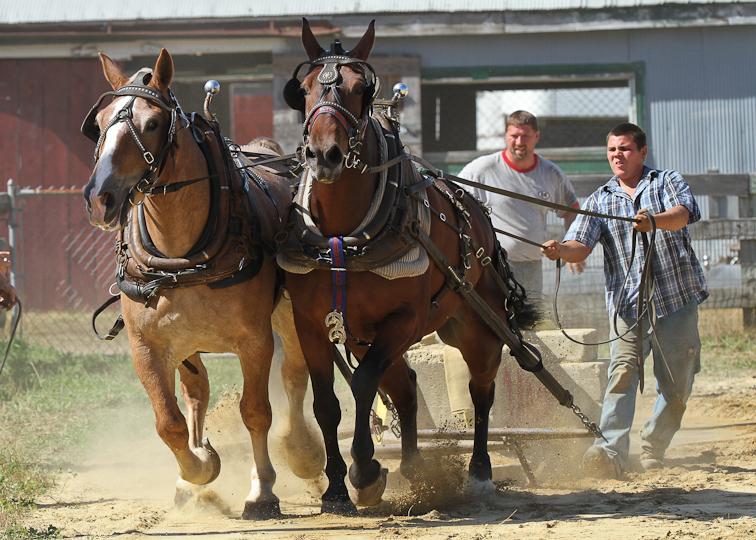 RochesterFair-HorsePull-IMG_8625