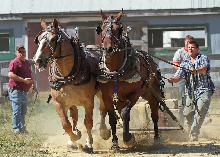 RochesterFair-HorsePull-IMG_8629