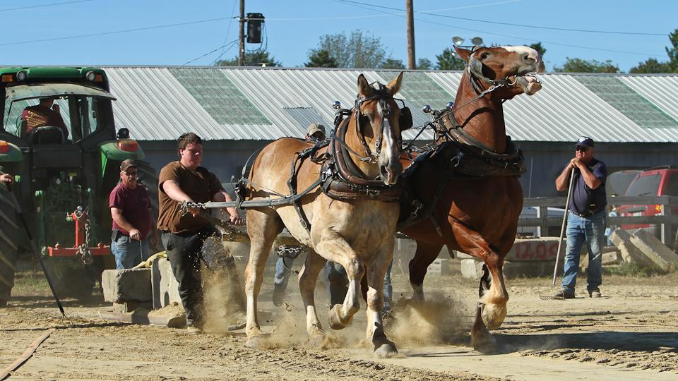 RochesterFair-HorsePull-IMG_8780