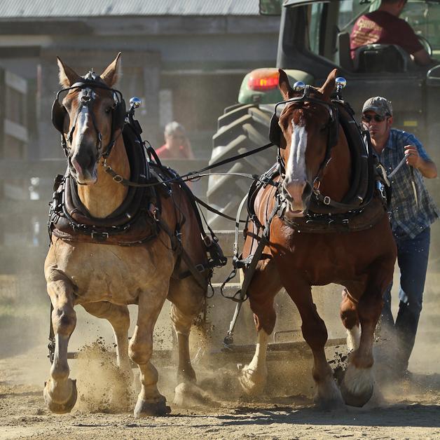 RochesterFair-HorsePull-IMG_8965