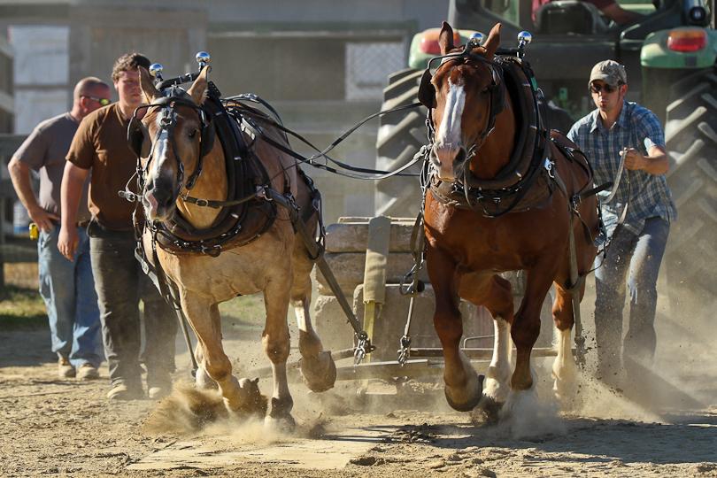 RochesterFair-HorsePull-IMG_9024