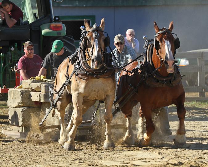 RochesterFair-HorsePull-IMG_9066