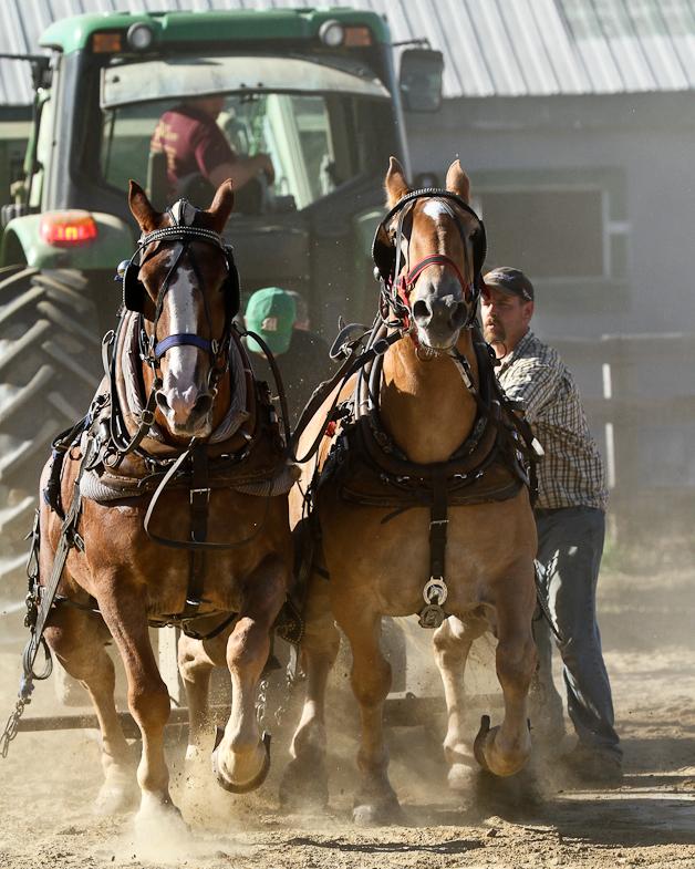 RochesterFair-HorsePull-IMG_9152