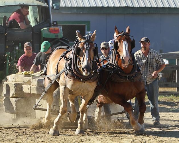 RochesterFair-HorsePull-IMG_9164