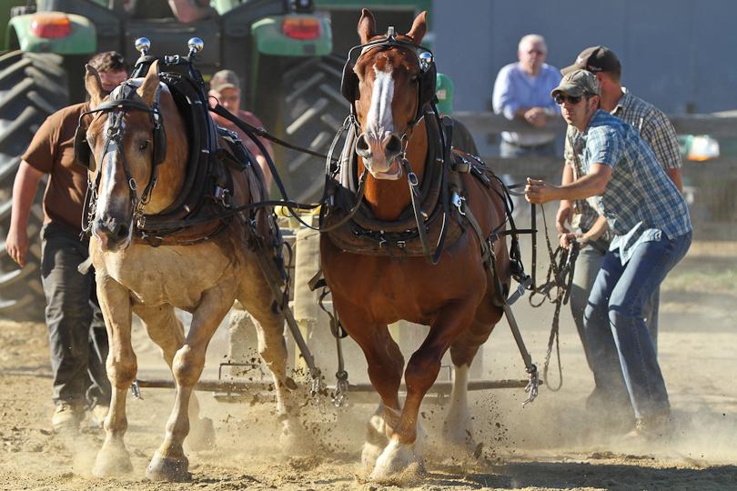 RochesterFair-HorsePull-IMG_9188