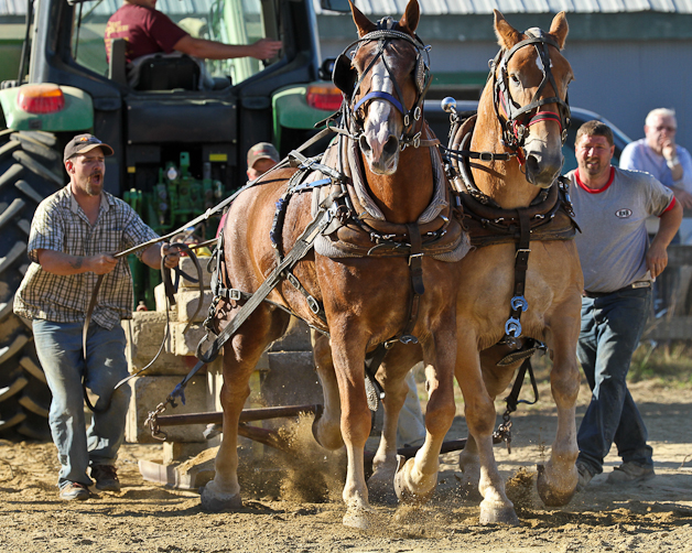 RochesterFair-HorsePull-IMG_9247