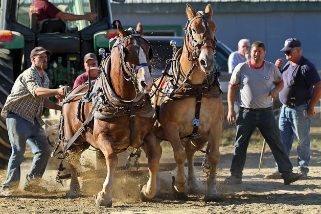 RochesterFair-HorsePull-IMG_9250