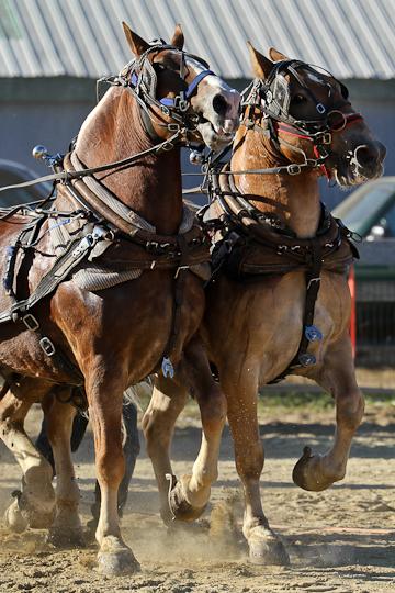 RochesterFair-HorsePull-IMG_9319