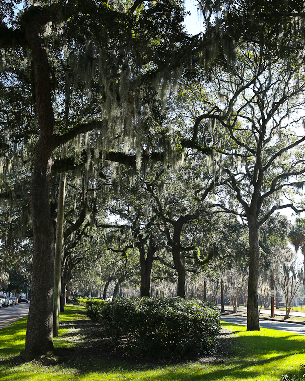 Savannah12.16.2013-6Y9A0891