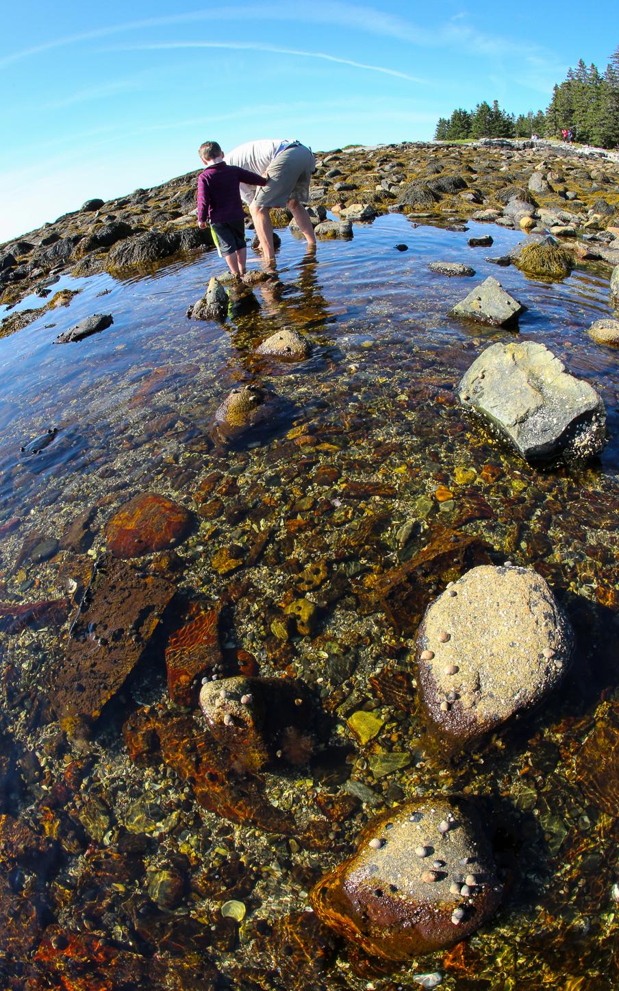 seawall.tidepool.9.2015-6Y9A2788
