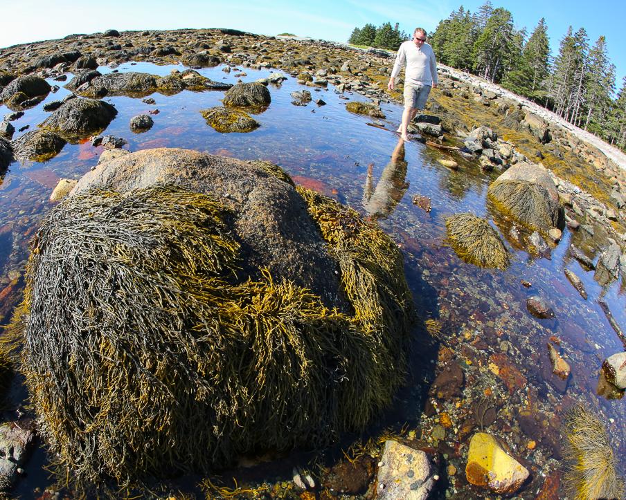 seawall.tidepool.9.2015-6Y9A2804