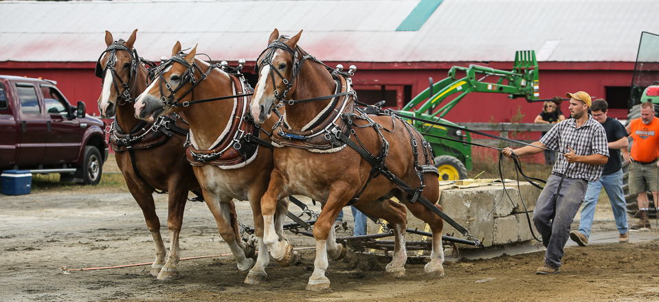 rochesterfair2016-triplehorsepull-6y9a1925