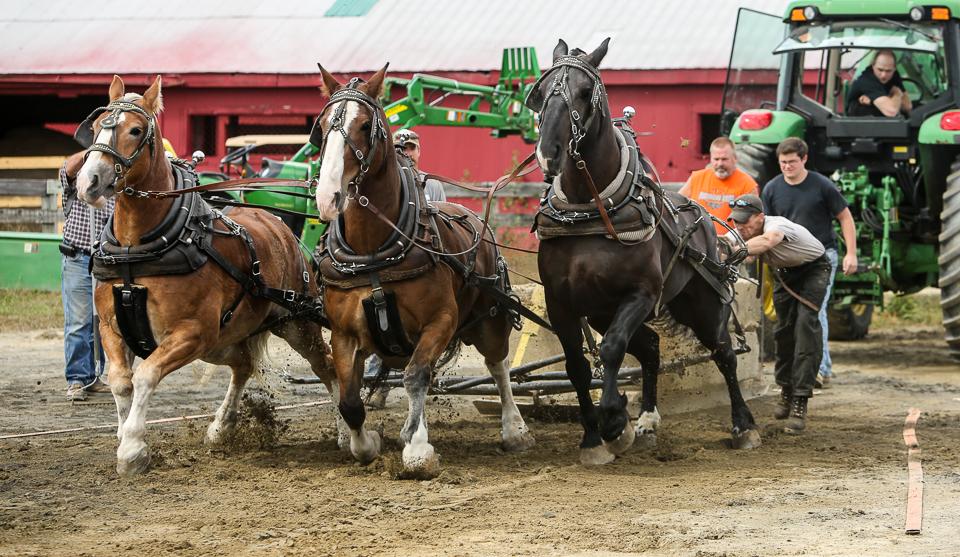 rochesterfair2016-triplehorsepull-6y9a1980