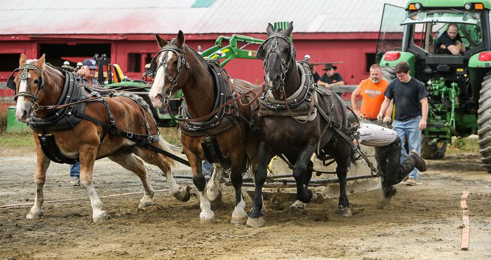 rochesterfair2016-triplehorsepull-6y9a1982