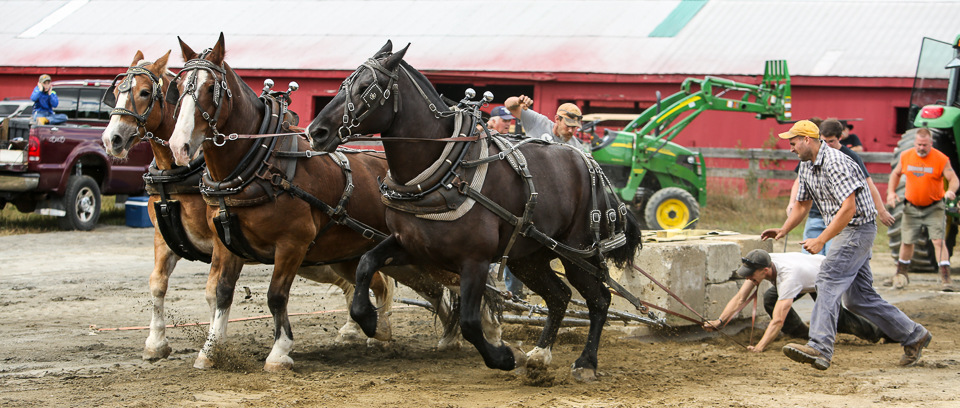 rochesterfair2016-triplehorsepull-6y9a1990