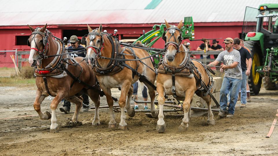 rochesterfair2016-triplehorsepull-6y9a2015