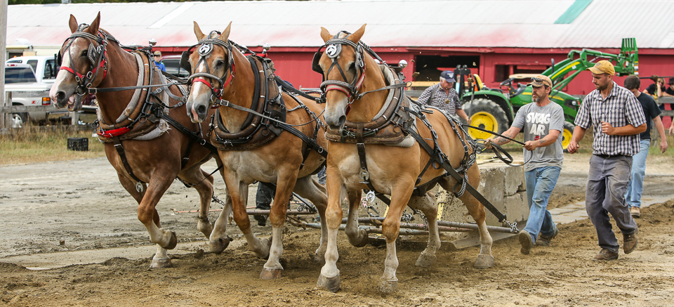rochesterfair2016-triplehorsepull-6y9a2026